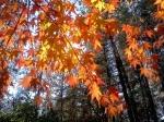fall-leaves-1372207-m