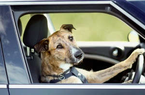 NZEALAND-ANIMAL-AUTO-DOGS-OFFBEAT